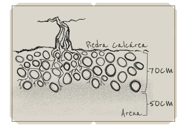 Terroir bodega septima Gualtallary
